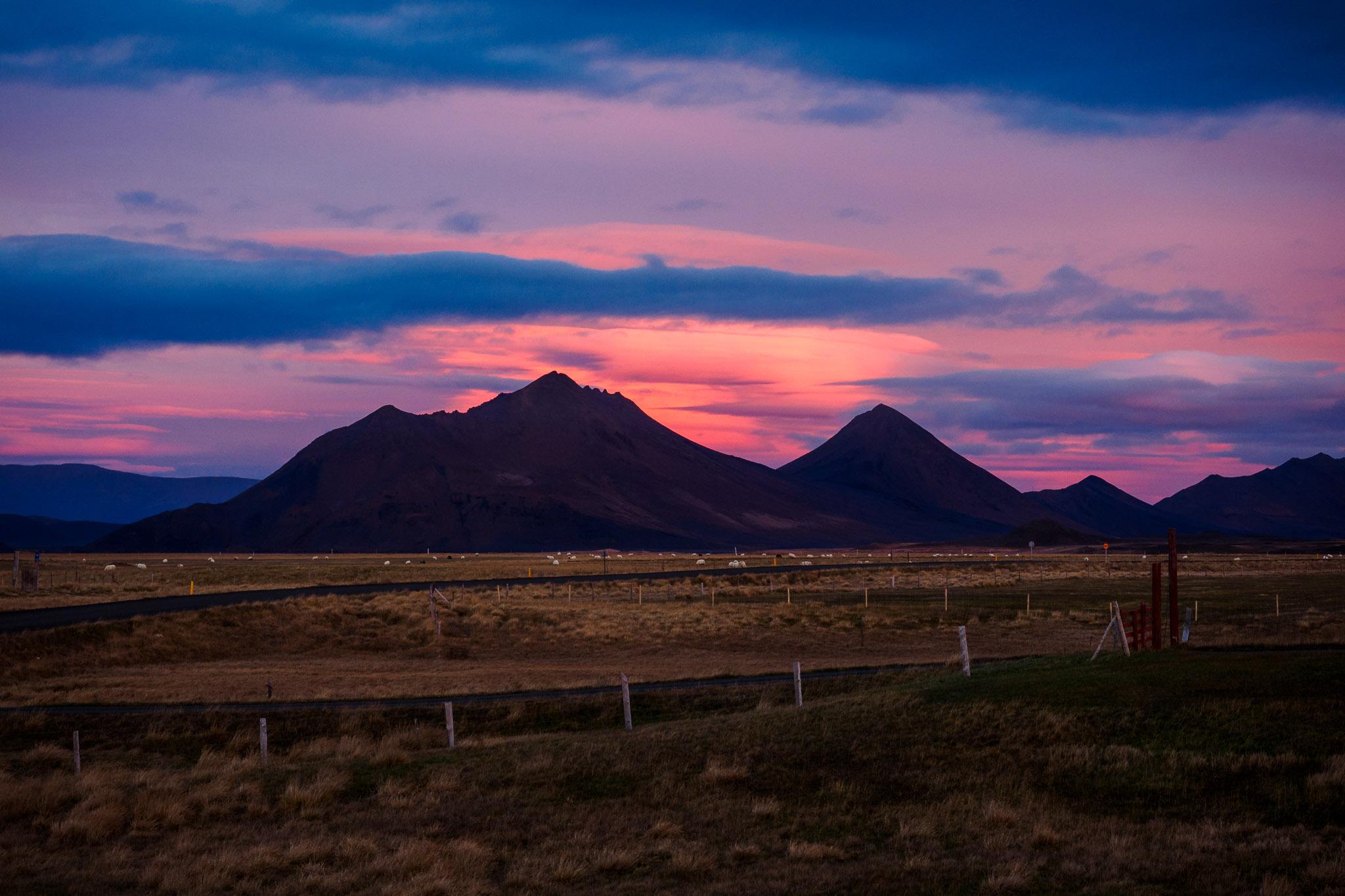 Island_Fjalladyrd